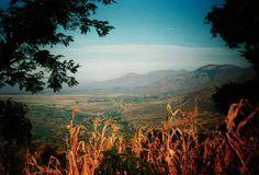 Masai Plains, Kitivo, north of the Western Usambaras