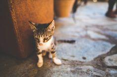 New free stock photo of animal pet cute