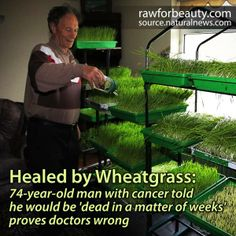 wheatgrass healing power