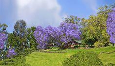 Ulupalakua Ranch Land by J Marielle