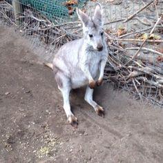Kangaroo Creek Farm Life's Been Good, Be Good To Me, Big Brother House, Kangaroo, Animals, Baby Bjorn, Animales, Animaux, Animal