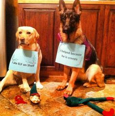 Even dogs hate Elf on a Shelf