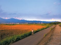 關渡平原 騎腳踏車