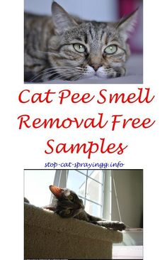 12 best cat pooping images hilarious jokes funny animals rh pinterest com