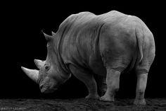 rhino IV by Wolf Ademeit on 500px