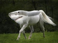 New Animal Species bred in Photoshop by artist Gyyp are bizarre and funny. Gyyp likes to experiment in Photoshop combining animal species to create new ones Beautiful Horses, Animals Beautiful, Beautiful Creatures, Horse Pictures, Funny Pictures, Animal Pictures, Strange Pictures, Photoshopped Animals, Funny Animals