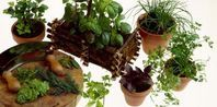 How to Grow an Indoor Vegetable Garden | eHow.com
