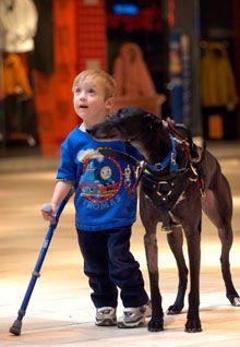 awsome pic of a greyhound service dog.