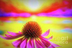 Photograph - Purple Coneflower 2 by Veikko Suikkanen , Sunflower Family, Framed Prints, Canvas Prints, Wood Print, Planting Flowers, Fine Art America, North America, Design Inspiration, Wall Art