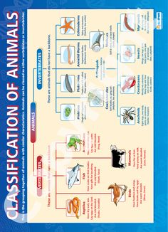 Classification of Animals Chart