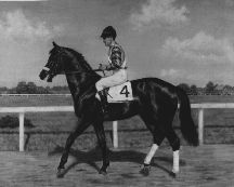 Black Gold...buried in the infield at Fairgrounds Field in New Orleans. Read the book by Marguerite Henry at least 50 times.