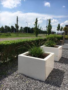 Polyester plantenbakken Lotus hoogglans wit