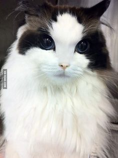 Extremely photogenic cat