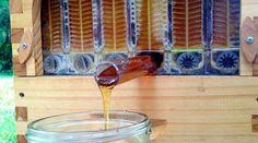 Sistema para cosechar la miel de colmenas sin molestar a las abejas