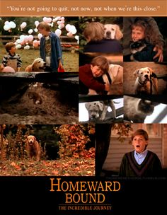 Homeward Bound: The Incredible Journey. Oh god, all the tears. The first movie to really make me cry. Right when Shadow is trying to get out of the hole. Tears my heart in two