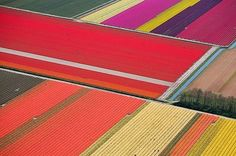 """Rayures bayaderes"" - Tulip fields in The Netherlands. Picture by Kate Pruitt."