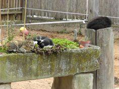 Die Katzen vom Sonnenhof