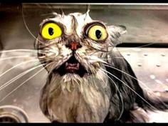 Best Funny Cats Videos Compilation | Приколы с котами #1 - Positive Life Magazine