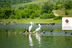 Get enchanted by the beauty of the Lailia forest, Lake Kerkini & Alistrati Cave to find your way closer to nature when you visit Serres in Greece. Greece Vacation, Greece Travel, Beyond The Border, Closer To Nature, Short Trip, Water Lilies, Hotel Spa, Bird Watching, Wonders Of The World