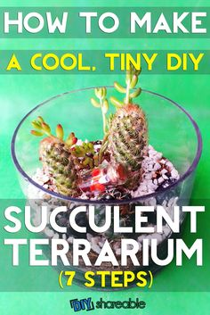 Looking for a houseplant you can keep alive? This DIY succulent terrarium tutorial will help liven up your décor and make you feel like you have a green thumb.