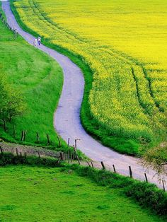 Landscape in Green and Yellow | Copyright ©Teresa Korzec