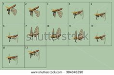 cartoon vector moth animation fly. Game icon funny fly insect. Vector design for app user interface.
