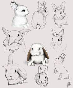 Quick_sketches_bunnies