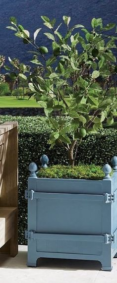 The boxed planters of the Orangerie and gardens at the Palace of Versailles have been icons since Louis XIV began his orange tree collection in 1663. We have replicated the famed design with our exclusive cast-aluminum Versailles Planter, versatile enough for citrus trees, olive trees, boxwood (especially topiary), or large plants. Perforated bottom for drainage. Citrus Trees, Palace Of Versailles, Louis Xiv, Large Plants, Grand Entrance, Olive Tree, Topiary, Planters, It Cast