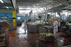 Instalaciones de la conservera gallega Igmontes