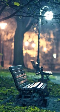 Bench in the park photography. Park Photography, Photography Gallery, Night Photography, Travel Photography, Rainy Night, Night Night, Street Lamp, Christmas Wallpaper, Street Photography