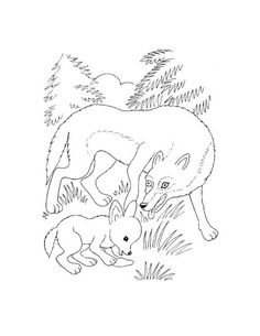 Ausmalbilder Wolf Kostenlos 3 WolfColoringColoring Pages To PrintAnimals Wolves