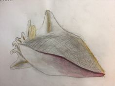 Lily, observational drawing for the Y7 'Underwater Project'. St Marys Catholic High School.