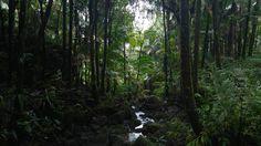 El Yunque Rainforest, Puerto Rico [OC] [5312x2988]