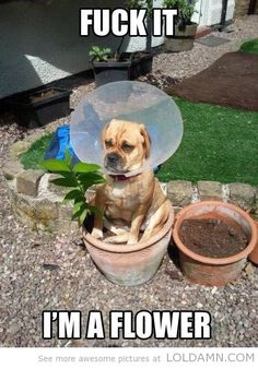 Funny dogs: I don't want to be a dog anymore - LOL, DAMN!
