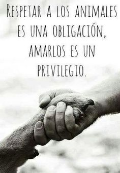 Amor a los animales http://www.gorditosenlucha.com/                                                                                                                                                     Más