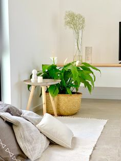 Modern living area with greenery, rug, cushions and a timber white tv cabinet Minimalist Design, Home, Living Area, 3 Bedroom House, White Tv Cabinet, House, Tv Cabinets, Studio, White Tv