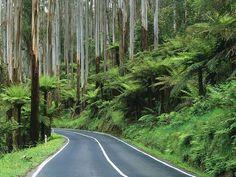 Road Through the Rainforest Yarra Ranges National Park Australia Australia Travel, Western Australia, Melbourne Australia, Places Around The World, Around The Worlds, Beautiful World, Beautiful Places, Beautiful Roads, Back Road