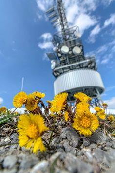 10 Ausflugsziele im Alpstein, Ostschweiz Cn Tower, Building, Travel, Switzerland Destinations, Day Trips, Beautiful Landscapes, Ruins, Road Trip Destinations, Explore