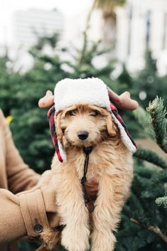 all that puppy cuteness and adorability won't last for long, and you'll be forever glad you captured such a wonderful part of your pup's life forever. Here are my Top 6 Tips for photographing your new puppy… Christmas Puppy, Christmas Tree Farm, Christmas Animals, Tartan Christmas, Magical Christmas, Country Christmas, Dog Photos, Dog Pictures, Mutt Puppies