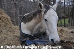 Poor baby didn't feel well :( http://www.thenorthcarolinacowgirl.com/2012/do-you-panic-when-you-find-your-horse-laying-down