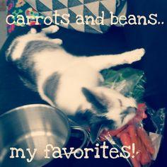 Weirdest cat alive :)