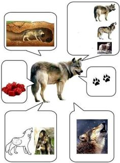 lobo Arctic Animals, Forest Animals, Farm Animals, Animals And Pets, Preschool Science, Science For Kids, Science And Nature, Animal Activities, Activities For Kids