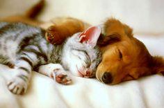 La misión espiritual de gatos y perros en nuestras vidas