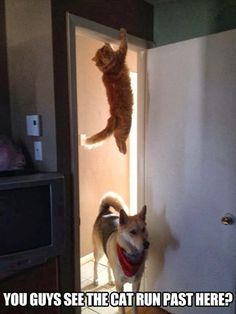 Looking for the cat...