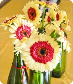 The coolest Gerbera daisies I've ever seen!