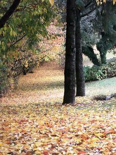 Path to heaven...  www.itaaragolf.com