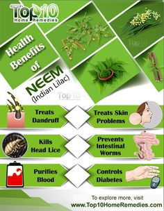 Top 10 Amazing Health Benefits of Neem (Indian Lilac) #neem #indian #lilac