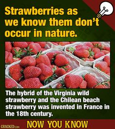 FOOD TRUTH: Your strawberry shortcake, strawberry banana smoothie, and honestly? even strawberry blond hair is an unholy abomination. #strawberry #food #foodtruth #foodfact