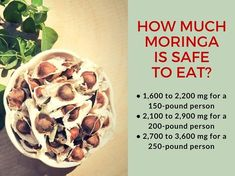 Moringa seeds also offer many nutritional benefits. For example, they contain Seven times more vitamin C than oranges. The moringa plant has been eaten by indigenous cultures worldwide for over years. Lemon Benefits, Coconut Health Benefits, Benefits Of Moringa Seeds, Curcuma Benefits, Sport Nutrition, Heart Attack Symptoms, Stop Eating, Health Tips, Health Articles
