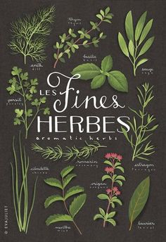 Herb illustration by Eva Juliet | simplesong hand lettering